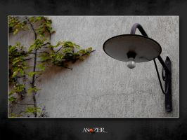 LIGHT WALL PLANT by ANOZER