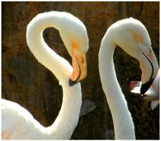 Flamingo's by Jenvanw