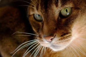 Simba 20100402 by FurLined