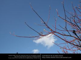 Branches 003 by Lelanie-Stock