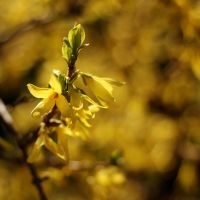 Yellow Spring  II. by dsfotods