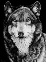 Wolf by ronmonroe