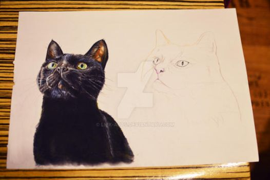 My lovely cats Kitty and Snor! (work in progress) by Lmk-Arts