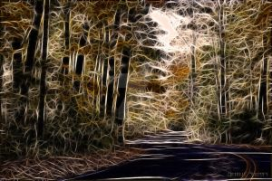 Into The Woods by BellaU