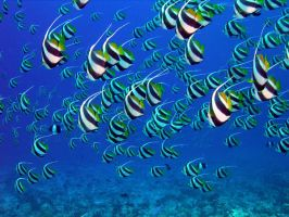 fishes1 by jaris1425