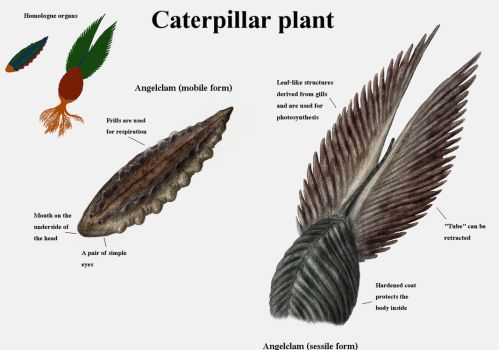 REP: The caterpillar plants by Ramul