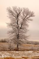 Frosty Tree by Wartydeathcap