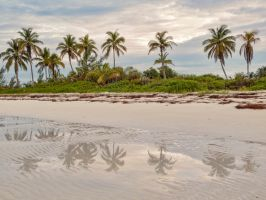 Reflective palms by peterpateman