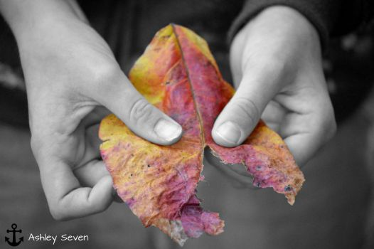 Colors Of Fall by Ashley7Jones