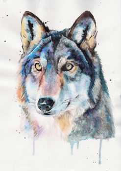 Wolf portrait by L-i-n-d-s