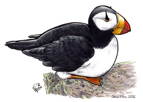 Horned Puffin by twapa