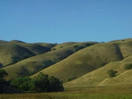 Golden California Hills by WoodsieWood
