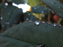 Raindrops on the leaf by pnpayam