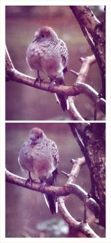 Winter Birds by kristi-leegibson