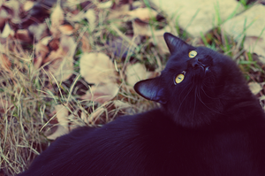 Jeffree Cat by OftheCrucified