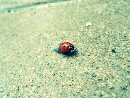 Ladybug So Pretty by NovumAurora