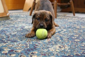 This Ball Tastes Like Tennis by BrownSwissAndLove