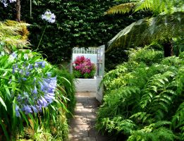 The Fernery by Forestina-Fotos