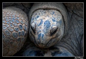 Turtle close-up by Seb-Photos