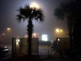 Palm Silouette by th3limit