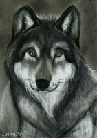 Day 153 - ACEO Drawing Project for Charity by secrets-of-the-pen