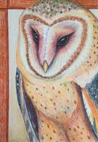 ACEO: Ashy Faced Owl by DanielleMWilliams