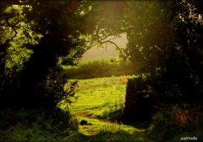 The Other field by Estruda