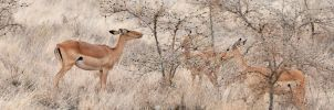 Eating Thorn Bushes by Bathlamos