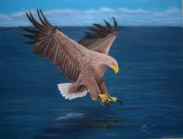 White tailed sea eagle and pastelpencils by riksons