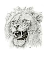 roaring lion by asussman