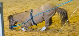 STOCK - 2014 Total Equine Expo-8 by fillyrox