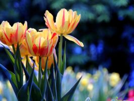 Spring Colors Mix 2 Satuated by dmguthery