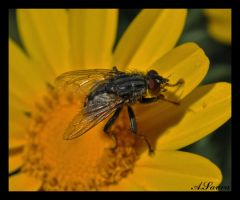 fly.. by tanares8