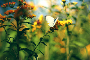 butterfly with yellow bg by zioomus