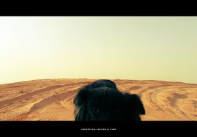 Lonely black doG by gianf
