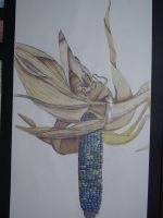 .:Realism, Indian Corn:. by JesamineFey123
