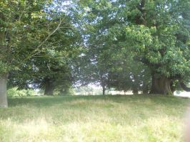 Petworth House and Park 104 by VIRGOLINEDANCER1