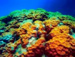 Great Barrier Reef I by vivylicious