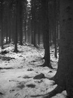 These woods are lovely, dark and deep by Blue-eyed-Kelpie