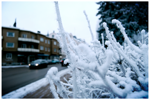A Winter World by Moggen2