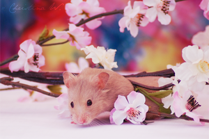 Happy Easter Hamster II by whensummerends