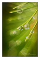 Raindrop by sunflies