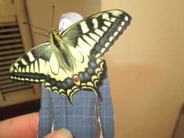 Papilio machaon 11 by FuriarossaAndMimma