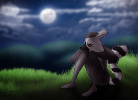 Anne the Lemur: In the Night by Hvan