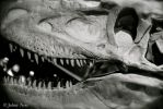 T-Rex Close Up by JohnyNoir