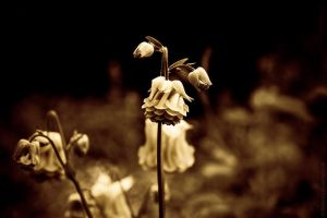 Transience II by MDelicata