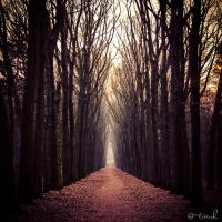 The Road of Silence by tvurk