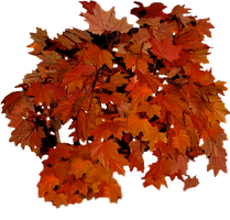Fall Leaves Clip Art by WDWParksGal-Stock
