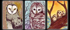 bunch of owls by ChemicalIceTea