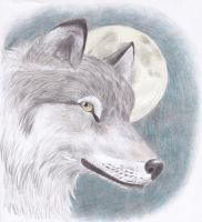 Canis lupus by Dontknowwhattodraw94